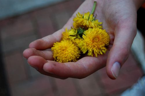 Dandelion, little boy's dirty hand