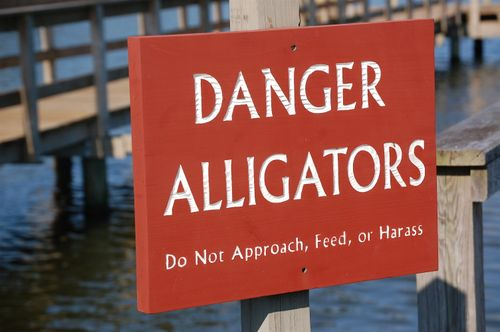 "Apparently, I can't read the ""Danger Alligators"" sign...;)"