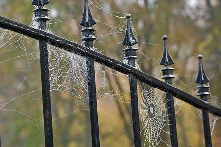spider web on gate