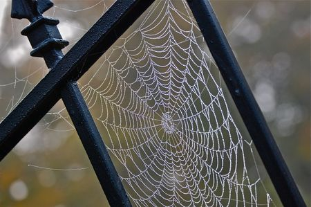 cool spider web picture