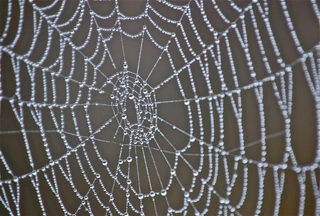 close up of center of spider web