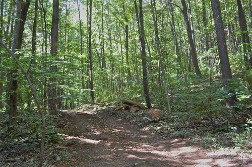 Biltmore Estate forest