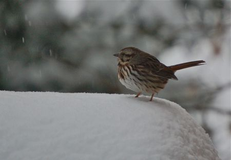 close up of bird in snow