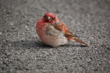 Little bird in the street