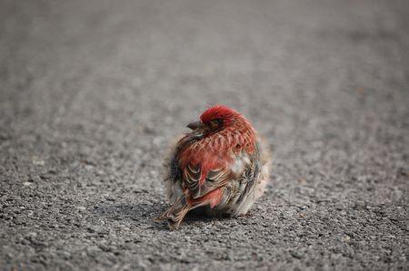 sick little bird