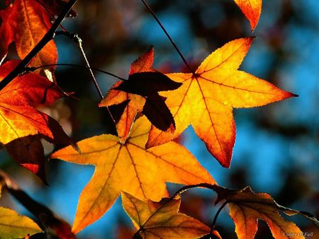 Fall-Leaves-beautiful-Autumn-31000