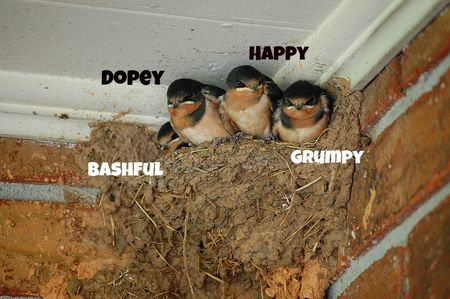 4 baby barnswallows
