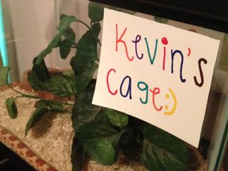 Kevin's cage
