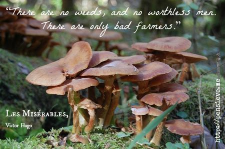 Mushrooms in forest ~ les miserable quote about bad farmers