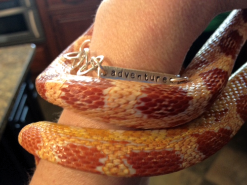 snake wrapped around arm