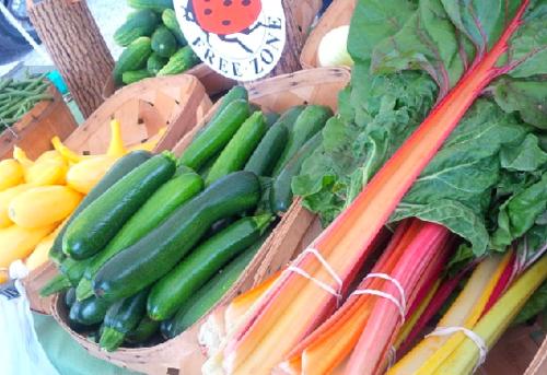 Summer veggies--yellow squash, zucchini, rainbow chard.
