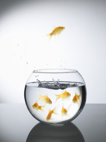 Steve-lupton-goldfish-jumping-out-of-a-bowl-and-escaping-from-the-crowd