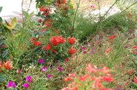 Hermitage_bay_flowers
