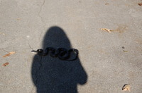 Snake_in_shadow