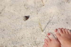 Feet_and_a_hermit_crab