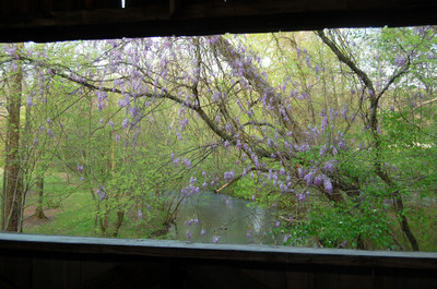 Wisteria_view_from_bridge