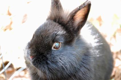 Wildeyed_pippin_the_rabbit