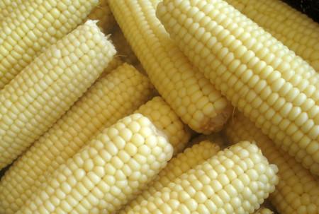 Silver_queen_corn