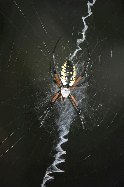 Writing_spider