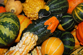 Colorful_gourds_and_squashes